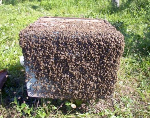 Beekeeper's apprentice - beekeeping guide (3)