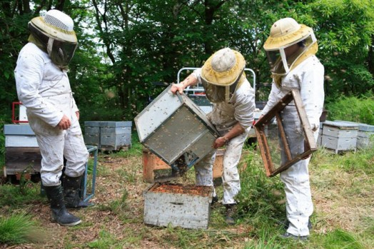 How to start beekeeping - beekeeping for beginners (8)