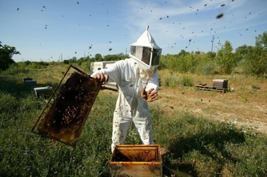 How to start beekeeping - beekeeping for beginners (5)