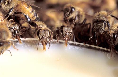 Apprenti apiculteur - guide apicole
