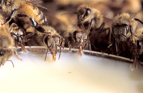 Beekeeper's apprentice - beekeeping guide
