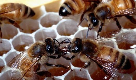 Cours d'apiculture - beekeping naturel (3)