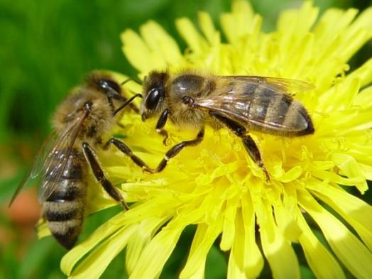 Urban beekeeping - modern beekeeping (5)