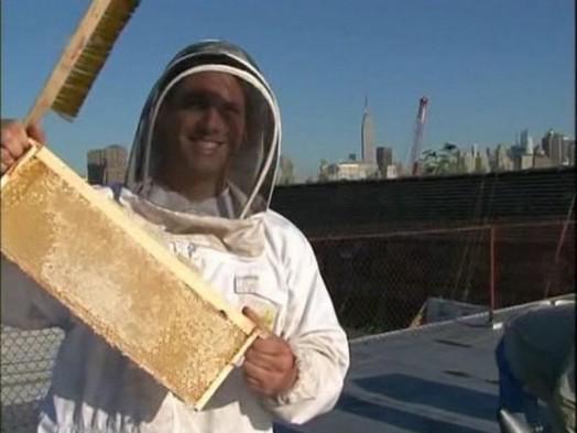 Urban beekeeping - modern beekeeping (2)