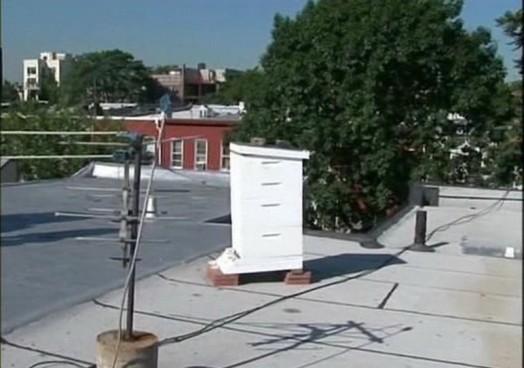 Urban beekeeping – modern beekeeping