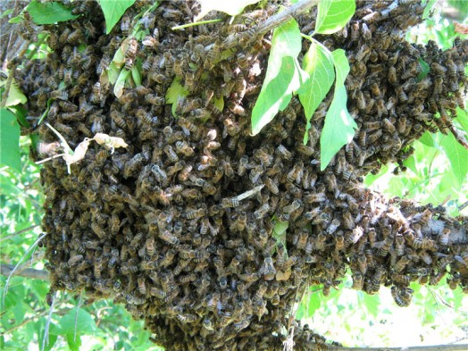 Beekeeping lessons - natural beekeping (2)