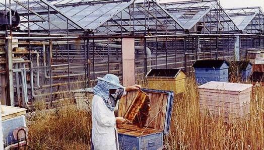 Urban beekeeping - modern beekeeping (4)