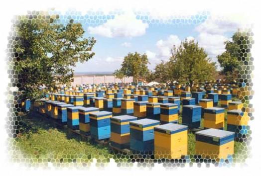 Beekeeper's apprentice - beekeeping guide (1)