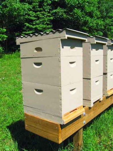 Beekeeping as a business - beginner bee keeping (3)