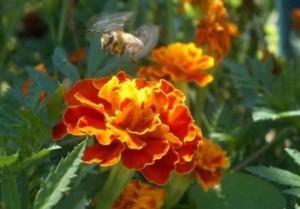 Cours d'apiculture - beekeping naturel (4)