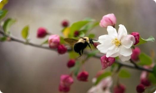 Abeilles en voie de disparition - extermination d'abeilles (2)