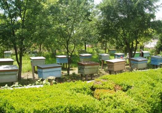 Where In Florida Are Honey Bees Natural Habitat 101