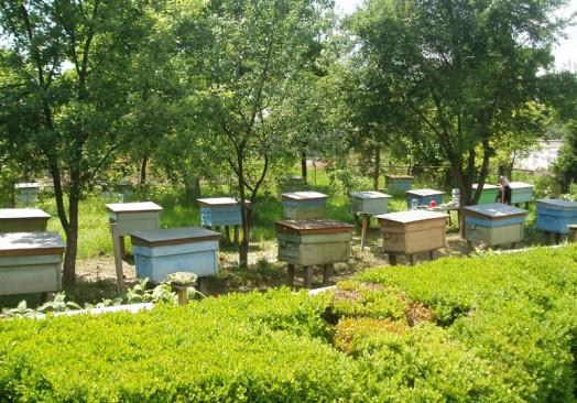 Habitat des abeilles - comment fonctionne l'abeille (5)