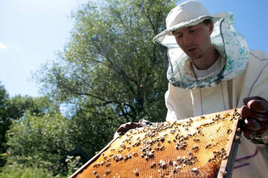 how to collect honey - beekeeping for dummies (5)