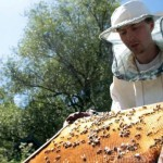 How to collect honey - beekeeping for dummies