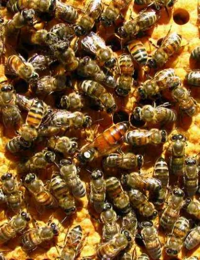 How to buy honey bees - buy beehive (2)