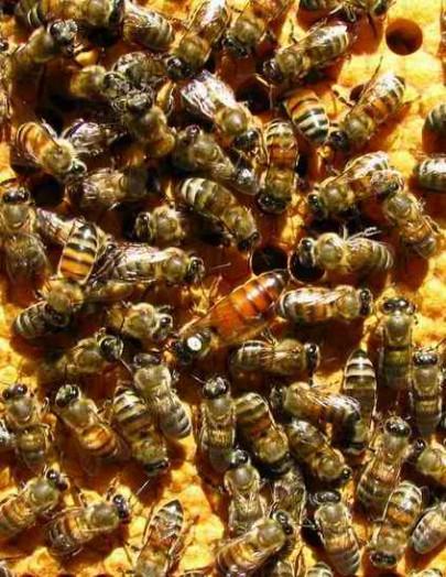 Comment acheter des abeilles - acheter ruche (2)