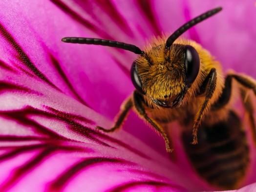 Habitat des abeilles - comment fonctionne l'abeille (4)