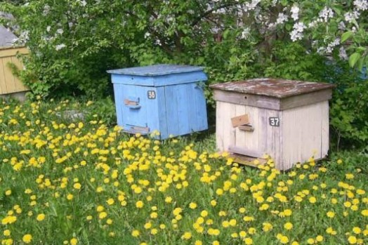 Bee habitat - how does bee work (3)