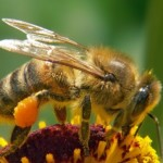Cool bee facts