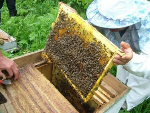 Honey processing - keeping honey bees (6)