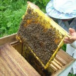 Honey processing