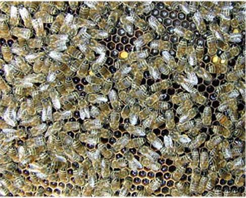 Comment acheter des abeilles - acheter ruche (5)