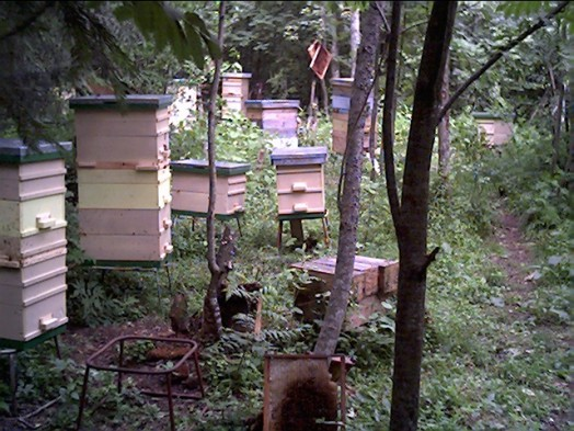Beehive size - bee hives plans (3)