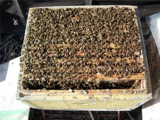 Comment acheter des abeilles - acheter ruche (1)