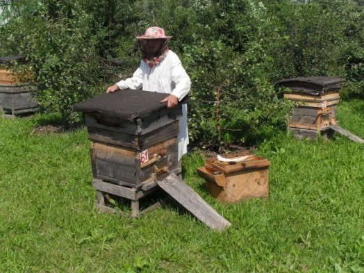 Raising honey bees - bee database (3)