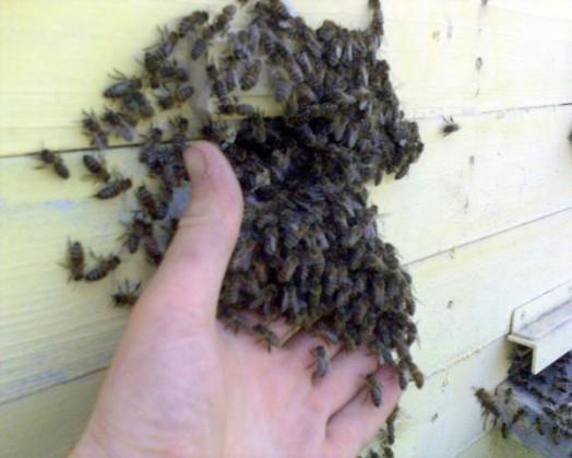 How to buy honey bees - buy beehive (4)