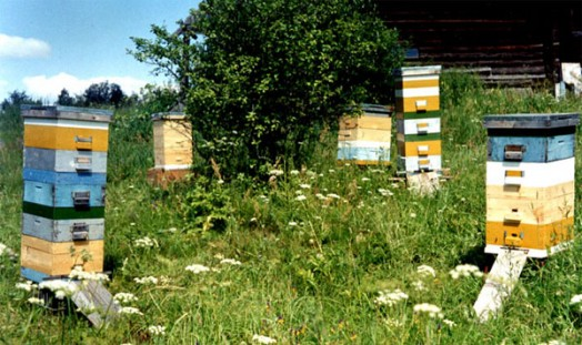 Beehive size - bee hives plans (2)