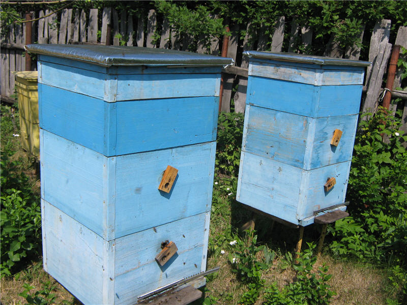 Beehive dimensions - making bee hives