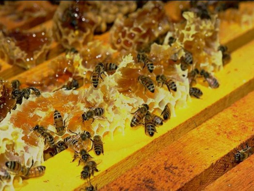 Honey bee farms - honey bee gardens (2)