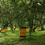 Honey bee farms