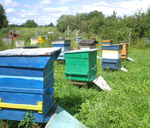 Honey bee farms - honey bee gardens (1)