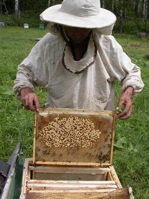 Beekeeper honey - keeping bee hives