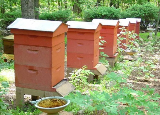 Beehive dimensions - making bee hives (1)