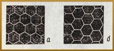 Abeille alvéolée - informations sur abeille à miel (4)