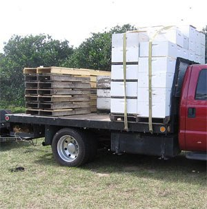 Package bees for sale - shipping bees (1)