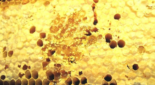 Honey crystals - crystalized honey (3)