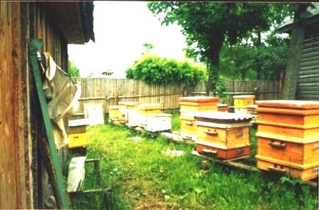 Bees apiary - honey apiary (2)
