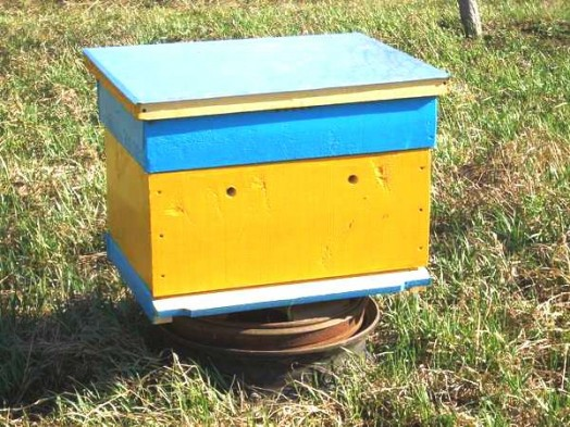 How to start a bee hive - starting bee hives (2)