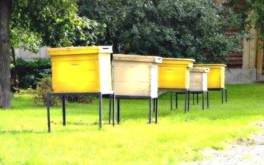 Bees apiary - honey apiary (4)
