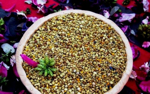 Bee pollen diet - bee bread (4)