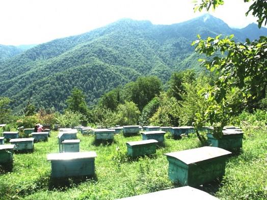 Bees apiary - honey apiary (3)