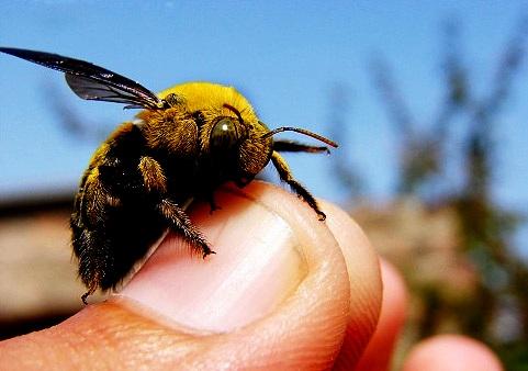 Bee sting symptoms2