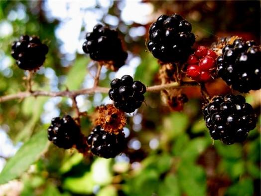 Blackberry honey - local raw honey (2)