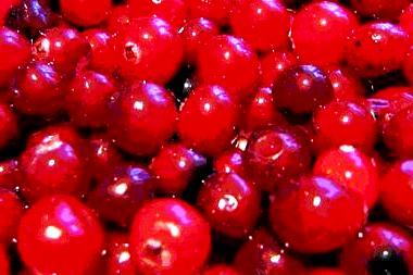 Cranberry honey (4)