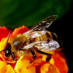 How does the bee work - beekeeping basics